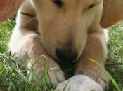 atelier chienzéhomesque Adopter chiot/ chien adulte: comment préparer venue?