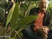 L'esprit plantes, intelligence végétale