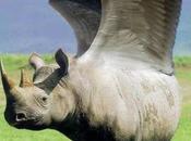 C'est rendu qu'un canard donne naissance poulet