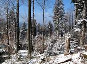 Dernières images l'hiver