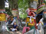 Thaïlande esprits grands arbres [HD]