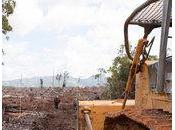 Pétition L'orang-outan, victime durable l'huile palme Sauvons Forêt