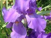 Pour Fête Maman, t'offre toutes fleurs jardin.