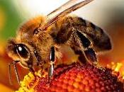 Géopolitique Environnement Abeilles...U.S.A., Russie Monsanto