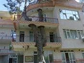 arbre Turquie