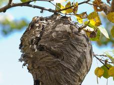 Comment soigner piqure d'abeille