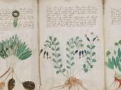 manuscrit Voynich