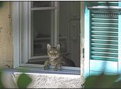 photo jour: chat voisine!