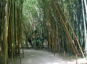 bambouseraie d'Anduze jardin exceptionnel