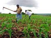 après Déclaration Maputo: paysans éleveurs d'Afrique, l'espoir désillusion
