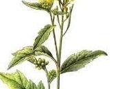 Histoire moutarde