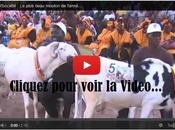 Senegal Concours plus beau mouton Tabaski