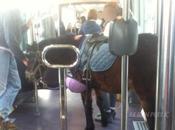 poney dans tramway Dijon