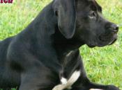 Recette shampoing désodorisant anti-puces pour chien