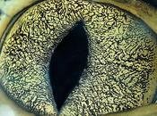 T'as beaux yeux sais