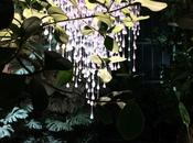 Noces Végétales Jardin Plantes