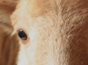 L'Ossau-Iraty t'offre deux entrées gratuites Salon l'Agriculture
