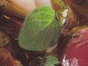 Aubergines marinées, menthe origan