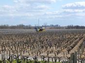 Primeurs 2013 Incidence climat millésime Bordeaux