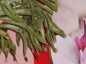 Rempotage Platycerium Fougère corne d'élan