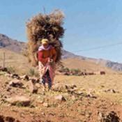 L'engagement femmes dans l'agriculture familiale paysanne