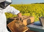travail insectes pollinisateurs plus efficace l'intensification agricole
