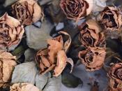 RoseS CouronnéeS