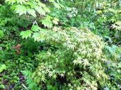 Dans famille Hostas, demande géants. plante adopter pour tous jardins