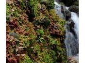 Source chaude Chaudefontaine, Vosges, France