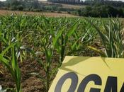Charente parcelles maïs détruire précaution