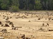 agrocarburants utilisés Europe accélèrent bien déforestation
