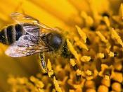 chant sacré abeilles
