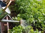 actions faire jardin juillet