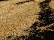 L'usage pesticides tuer production agricole