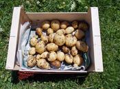 Tour pommes terre marche