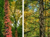 Signe semence Bois Belle-Rivière