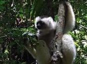 Madagascar dernier film inédit Ronan Fournier-Christol