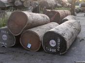 Amazonie piste bois illégal