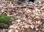 Auberta retrouvera forêts Pyrénées