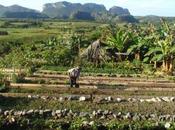 Cuba, pays l'agroécologie vraiment appliquée