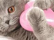 Pour détecter anomalie cardiaque chez chat existe test sanguin