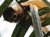 Voyage Pérou Amazonie pirhanas