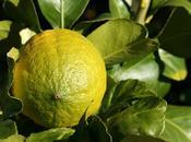 avocat citron concombre pignons