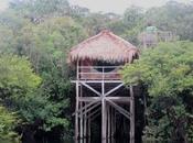 Impressionnante Amazonie!