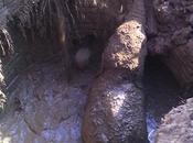 éléphante sauve petit d'une mort certaine