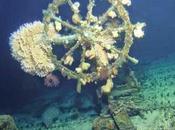 """""""bateau fantôme"""" intact découvert large côtes d'Hawaï"""