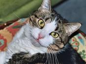 Smoky chat, elle accompagnée pendant ans, morte