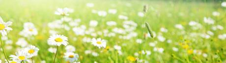 Comment protéger allergies printemps