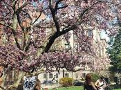 Outdoor music Barnard College. Spring makes look so...