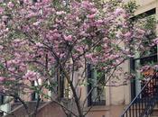 💓🌸🌳Une balade improvisée après-midi. #NYC #spring #Brooklyn...